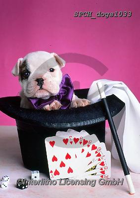 Xavier, ANIMALS, REALISTISCHE TIERE, ANIMALES REALISTICOS, dogs, photos+++++,SPCHDOGS1033,#a#, EVERYDAY