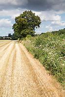 Field margin after harvest - Norfolk, July