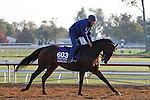 October 23, 2015:  Green Mask, trained by Wesley Ward, and owned by Abdullah Almaddah, is entered in the Breeder's Cup Turf Sprint.  Candice Chavez/ESW/CSM
