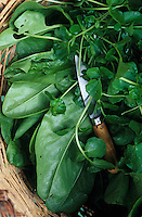 """Europe/France/Languedoc-Roussillon/66/Pyrénées-Orientales/Vallepsir/Env Prats de Mollo la Preste: Salade du jardin et cresson à la ferme auberge """"La Costa de Dalt"""""""