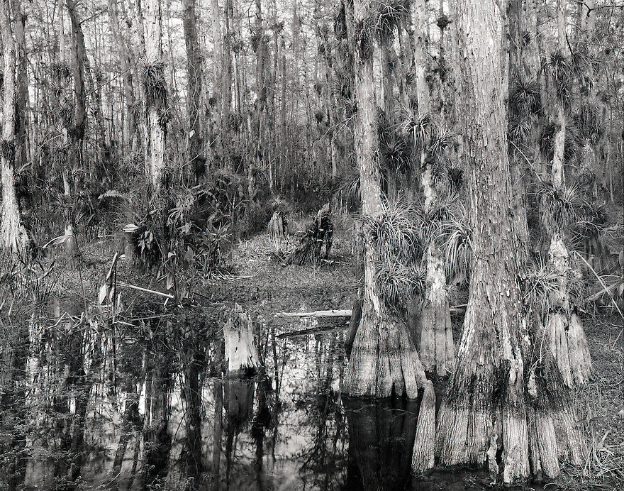 A casual drive on the Loop Road in the Big Cypress National Preserve, brought me to this wilderness scene.