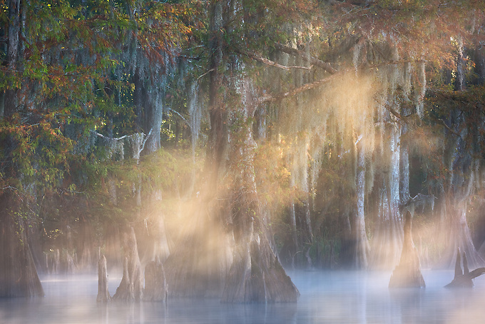 Sunrise light split like a prism through a grove of bald cypress during autumn in south Louisiana.