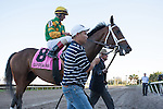 John Velasquez and Palace Malice are lead into the winners circleby Cot Cambell after winning the Gulfstream Park Handicap (G2). Gulfstream Park, Hallandale Beach Florida. 02-08-2014