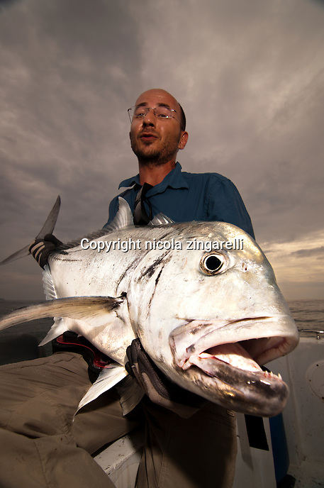 The Giant Trevally (Caranx ignobilis) is a very much sought after gamefish because of its strenght and spectacular strikes, even when they are relatively small they still fight hard