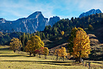 Oesterreich, Salzburger Land, Pongau, bei Filzmoos: Herbstlandschaft vor dem Dachsteingebirge | Austria, Salzburger Land, Pongau, near Filzmoos: autumn scenery and Dachstein Mountain Range