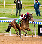 OZONE PARK, NEW YORK - DEC 2: #5, ridden by Manuel Franco, wins the Remsen Stakes, at Aqueduct Racetrack, on December2, 2017 in Ozone Park, New York. ( Photo by Dan Heary/Eclipse Sportswire/Getty Images)
