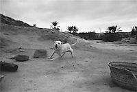 Chained dog, Tunisia 1999