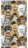 GIORDANO, CUTE ANIMALS, LUSTIGE TIERE, ANIMALITOS DIVERTIDOS, paintings+++++,USGI2762CN,#ac#, EVERYDAY,cats