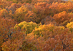 Orange and yellow Fall colors Commonwealth of Virginia, Fine Art Photography by Ron Bennett, Fine Art, Fine Art photography, Art Photography, Copyright RonBennettPhotography.com ©