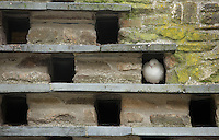 FAO JANET TOMLINSON, DAILY MAIL PICTURE DESK<br />Pictured: A dove in a building roof Wednesday 23 November 2016<br />Re: The Dog House in the village of Talog, Carmarthenshire, Wales, UK
