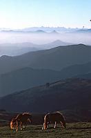 """Europe/France/Aquitaine/64/Pyrénées-Atlantiques/Pic Artzamendi: Panorama et Pottoks (prononcé """"Pottiok"""")"""