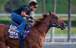 October 26, 2014:  Sweet Swap, trained by John Sadler, exercises in preparation for the Breeders' Cup Turf Sprint at Santa Anita Race Course in Arcadia, California on October 26, 2014. Scott Serio/ESW/CSM