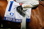 LEXINGTON, KY - APRIL 09: #1 Weep No More's saddle cloth after winning the 79th running of the Central Bank Ashland (Grade 1) $500,000 at Keeneland race course for owner Ashbrooke Farm (Glenn Bromagen), trainer George Arnold II, and jockey Corey Lanerie .  April 9, 2016 in Lexington, Kentucky. (Photo by Candice Chavez/Eclipse Sportswire/Getty Images)