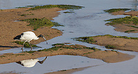 One of several birds seen from this lovely riverside spot on the southern border of Kruger National Park.