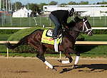 April 23, 2014 We Miss Artie galloped with Nick Bush at Churchill Downs.  He is owned by Ken and Sarah Ramsey and trained by Todd Pletcher.