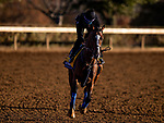 November 4, 2020: Authentic, trained by trainer Bob Baffert, exercises in preparation for the Breeders' Cup Classic at Keeneland Racetrack in Lexington, Kentucky on November 4, 2020. Alex Evers/Eclipse Sportswire/Breeders Cup