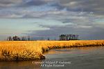 Winter Salt Marsh, Bombaby Hook National Wildlife Refuge, Delaware