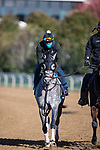 County Final, trained by Steven M. Asmussen, exercises in preparation for the Breeders' Cup Juvenile Turf Sprint at Keeneland 11.03.20.