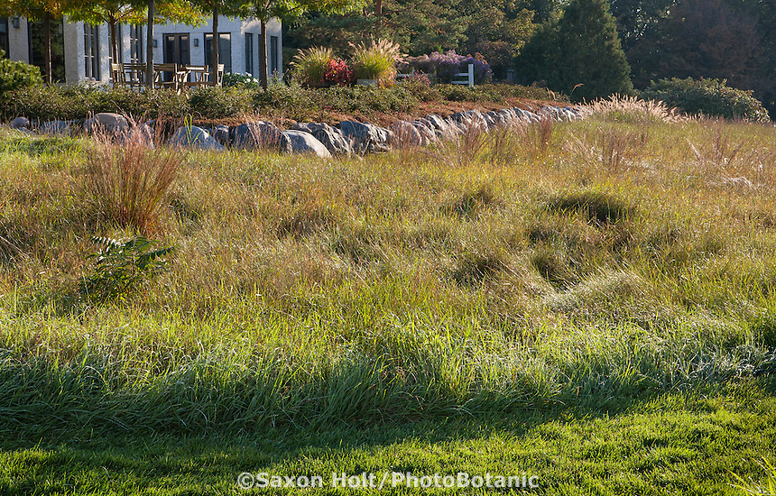 Mown lawn path at edge of meadow using Little Bluestem grass (Schizachyrium scoparium) in reddish fall color in midwest meadow garden