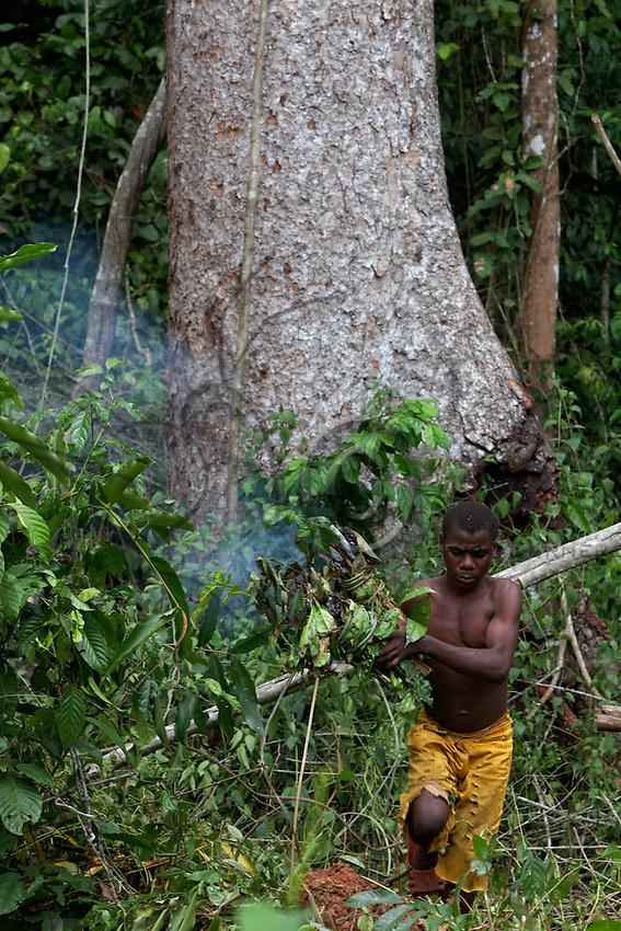 A man at the foot of an enormous mahogany tree prepares the vegetal smoker.///Un homme au pied d'un énorme acajou prépare l'emfumoir végétal.