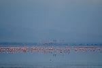Flamingos at Lake Manyara, Africa