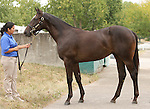 11 September 2010.  Hip #198 Arch - Spice Island colt, consigned by Blandford Stud.