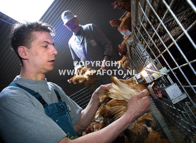 Angeren, 210301  Foto: Koos Groenewold / APA Foto<br />Dhr Peer ent kippen in bij kippenhoder Roelofs die op de achtergrond staat.