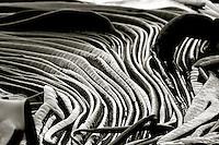 Dervillea antarctica or Ribbon Kelp, Macquarie Island, Antarctica