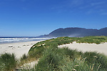 Grass covers dunes in dramatic seascape of Pacific Ocean beach at Nehalem Bay State Park, Nehalem, Oregon near picture perfect Manzanita.