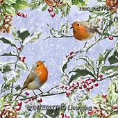 Marcello, CHRISTMAS SYMBOLS, WEIHNACHTEN SYMBOLE, NAVIDAD SÍMBOLOS, paintings+++++,ITMCXM1475B,#XX# ,red robin