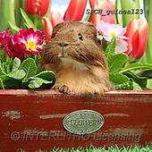 Xavier, ANIMALS, REALISTISCHE TIERE, ANIMALES REALISTICOS, photos+++++,SPCHGUINEA123,#A#, EVERYDAY ,funny