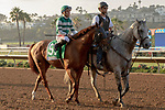 """DEL MAR, CA  AUGUST 18:  #5 Accelerate, ridden by Joel Rosario,in the post parade of the $1 Million TVG Pacific Classic (Grade l) """"Win and You're in Classic Division"""" on August 18, 2018 at Del Mar Thoroughbred Club in Del Mar, CA. (Photo by Casey Phillips/Eclipse Sportswire/Getty Images"""