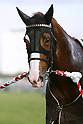 Horse racing: Tokai TV Hai Tokai Stakes