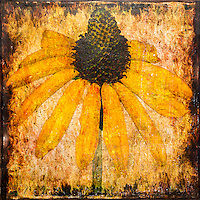 Nature Images Cradle Board Transfers