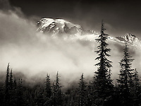 Fog trees and Mt. Rainier. Mt. Rainier National Park, Washington