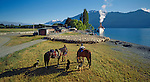 Musterers with horses and dogs with sheep at Mount Nicholas Station. The Steamship 'Earnslaw' at Lake Wakatipu Otago  New Zealand.