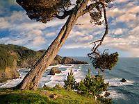 Overhanging tree and surf at Samuel H. Boardman State Scenic Corridor. Oregon