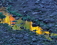 Reflection in small puddle along Hood River in Hood River County, Oregon
