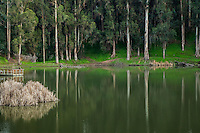 A woman fishes from the dock while towering trees reflect in the water of the fishing lake at the Don Castro Regional Recreation Area in Castro Valley, California.