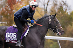 October 28, 2015:  Joe Franklin, trained by David Jacobson and owned by Final Turn Racing Stables, exercises in preparation for the Breeders' Cup Turf Sprint at Keeneland Race Track in Lexington, Kentucky on October 28, 2015.  Jon Durr/ESW/CSM