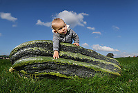 BNPS.co.uk (01202 558833)<br /> Pic: ZacharyCulpin/BNPS<br /> <br /> Mark Baggs' son Luke (16 months) with the marrow<br /> <br /> A farmer is celebrating after growing a record-breaking marrow, which tips the scales at more than 200lbs.<br /> <br /> Mark Baggs' marrow is the biggest ever grown in Britain and the second heaviest in the world.<br /> <br /> Weighing in at 200lbs 6ozs Mark's marrow is just six pounds short of the current world record that was grown in Holland in 2009.