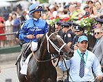June 6 2015: Wedding Toast with Jose Lezcano win the 47th running of the Grade I Ogden Phipps Stakes forfillies & mares, 4-year olds & up,  going 1 1/16 at Belmont Park.  Trainer Kiarin McLaughlin . Owner Godolphin Stable. Sue Kawczynski/ESW/CSM