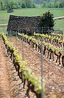 Europe/France/Midi-Pyrénées/46/Lot/Glanes: Les vignes - Vin de Glanes
