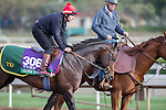 OCT 26 2014:Brown Panther, trained by Tom Dascombe, exercises in preparation for the Longines Breeders' Cup Turf at Santa Anita Race Course in Arcadia, California on October 26, 2014. Kazushi Ishida/ESW/CSM