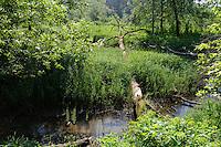 Gauja-Talaue bei Cesis, Lettland, Europa