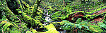 Australia Panorama - Rainforest walk in Cradle Mountain, Tasmania, Australia.<br /> <br /> Image taken on large format panoramic 6cm x 17cm transparency. Available for licencing and printing. email us at contact@widescenes.com for pricing.