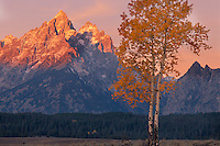 Aspens and the Grand Teton<br />   from the Snake River Valley<br /> Grand Teton National Park<br /> Rocky Mountains,  Wyoming
