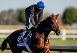 November 2, 2020: Midnight Sands, trained by trainer Brendan P. Walsh, exercises in preparation for the Breeders' Cup Dirt Mile at Keeneland Racetrack in Lexington, Kentucky on November 2, 2020. Scott Serio/Eclipse Sportswire/Breeders Cup/CSM