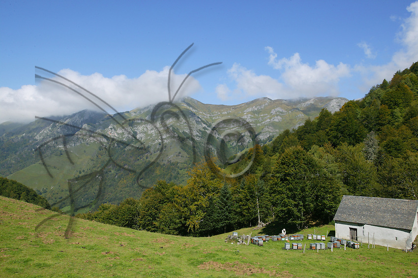 An apiary set in the mountains for rhododendron flowers and heather.