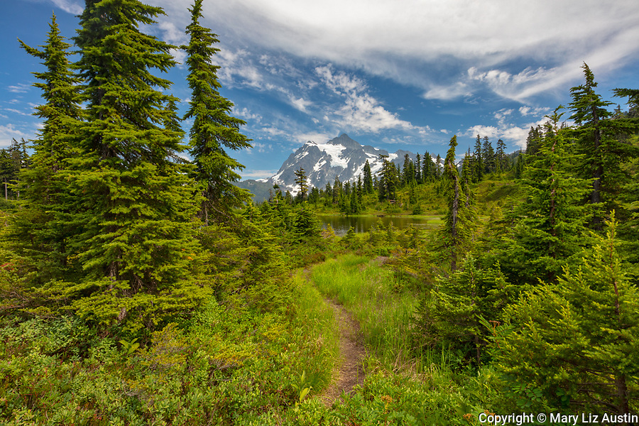Mount Baker-Snoqualmie National Forest, WA <br /> Trail near the shoreline of Picture Lake with Mount Shuksan in the distance